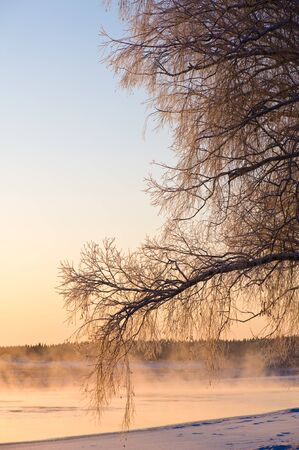 Frost covered tree branches and mist over freezing river water on a cold winter day. Scenery lit by low angle sun.