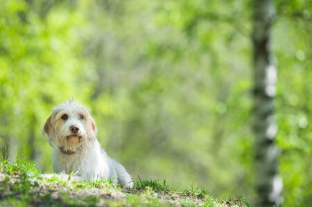 Young dog resting on park lawn. Banque d'images - 132557642