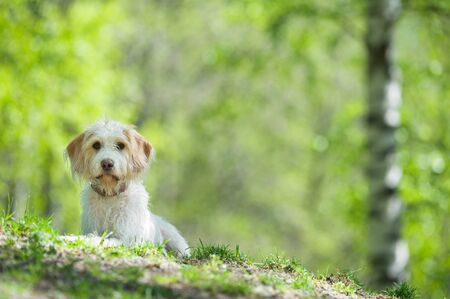 Young dog resting on park lawn. Banque d'images - 132556719