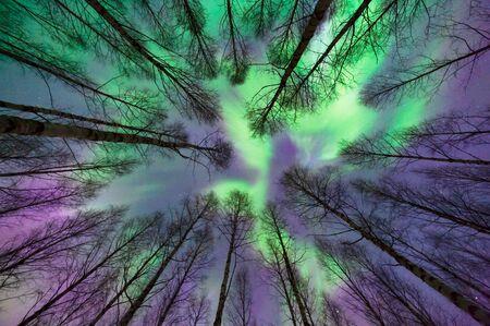 Aurora borealis, Northern lights, above treetops in winter night, Eastern Finland