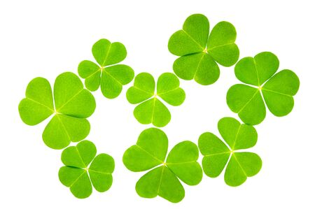 Wood sorrel (Oxalis acetosella) leaves isolated on white background. 版權商用圖片