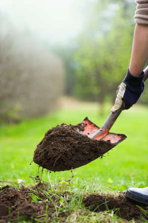Gardener is digging soil with a shovel and preparing to plant plants. Springtime in the garden.