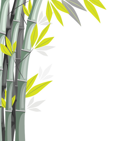 Bamboo with shadows isolated on white background Vector