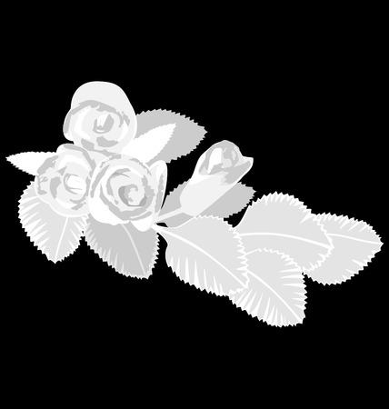 White flowers isolated on black background