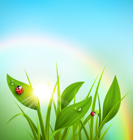 sunbeam background: Green grass, plantain and ladybugs with sunrise and rainbow on blue sky. Floral nature spring background