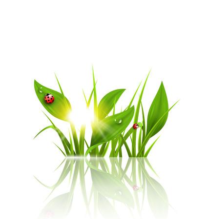 weegbree: Groen gras, weegbree en lieveheersbeestjes met zonsopkomst en reflectie op wit. Bloemen natuur voorjaar achtergrond Stock Illustratie