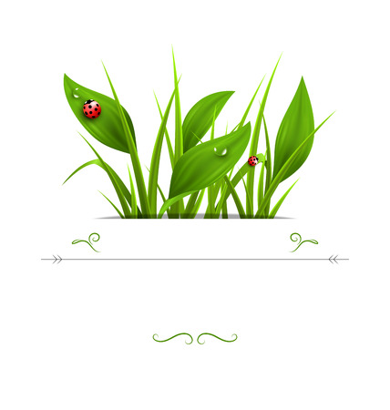 lady cow: Green grass, plantain and ladybugs isolated on white. Floral nature spring background Illustration