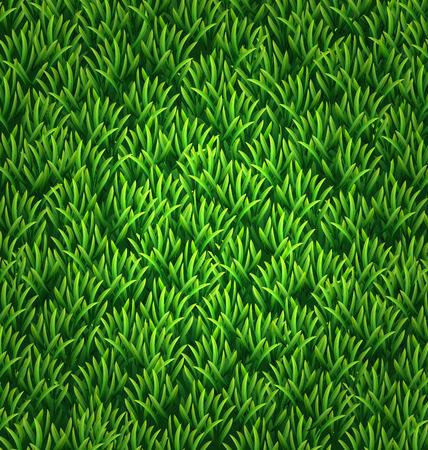 grass texture: Green grass texture. Floral nature spring background