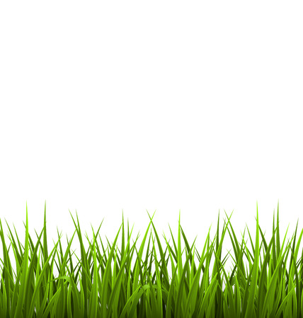 Green grass lawn isolated on white. Floral nature spring background Çizim