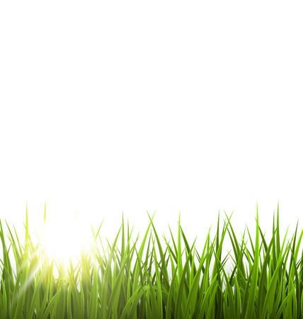 grass lawn: Green grass lawn with sunrise on white. Floral nature spring background