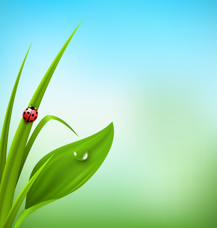 lady cow: Green grass, plantain and ladybug on blue sky. Floral nature spring background