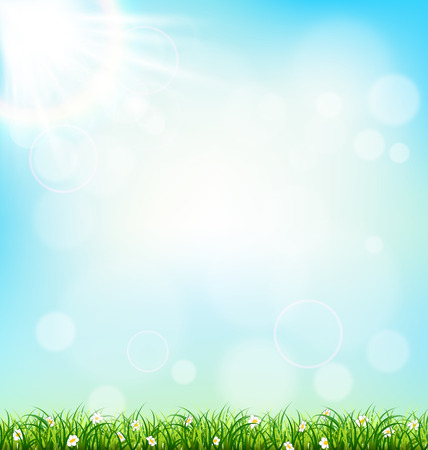 Green grass lawn with chamomiles on blue sky. Floral nature spring background