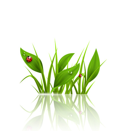 lady cow: Green grass, plantain and ladybugs with reflection on white. Floral nature spring background Stock Photo