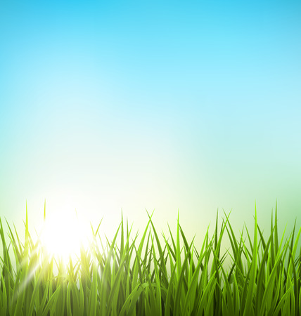 garden landscape: Green grass lawn with sunrise on blue sky. Floral nature spring background