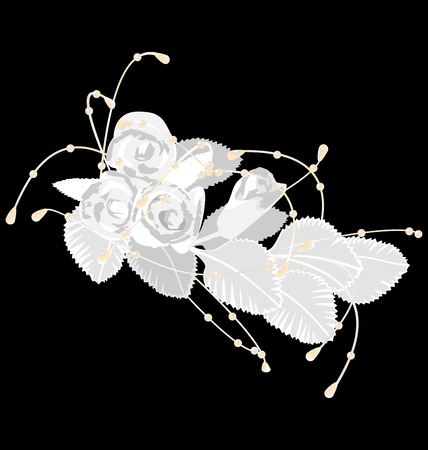 White roses isolated on black background Vettoriali