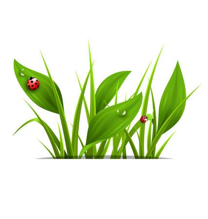 weegbree: Groen gras, weegbree en lieveheersbeestjes op wit wordt geïsoleerd. Bloemen natuur voorjaar achtergrond Stock Illustratie