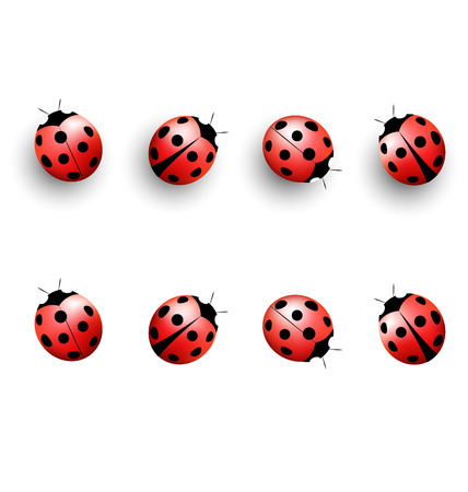 lady cow: Four lady bugs with shadows and isolated on white background Stock Photo