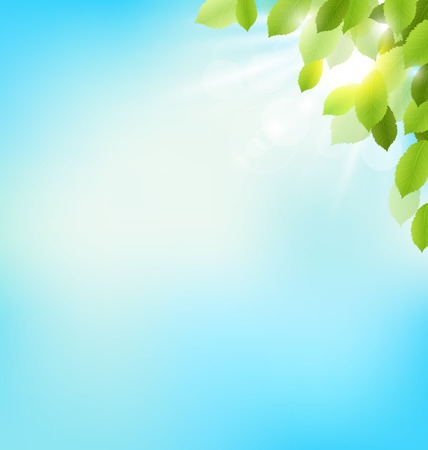 Tree foliage with sunlight on sky. Floral nature spring background Stok Fotoğraf - 37832817