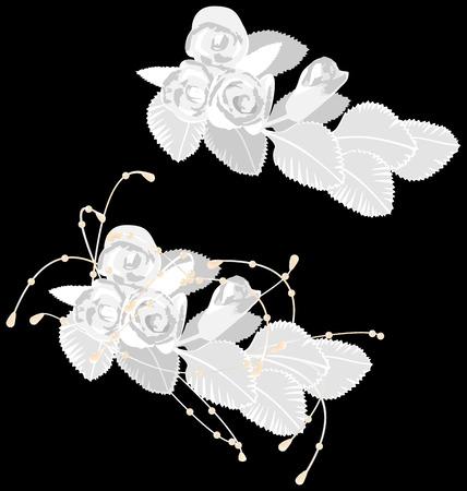 White roses isolated on black background Çizim