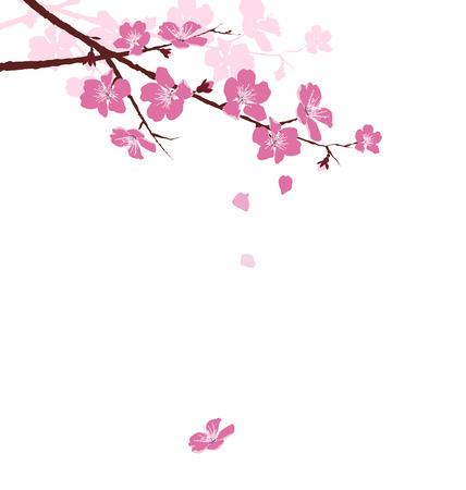 Branche de cerisier avec des fleurs isolé sur fond blanc Illustration