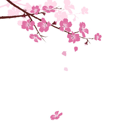 Cherry branch with flowers isolated on white background