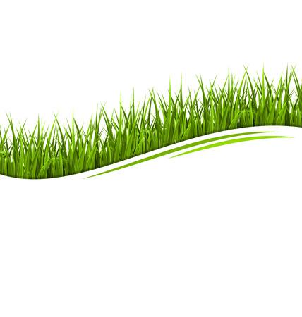 緑の草の芝生の波白で隔離。花エコ、自然の背景
