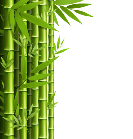 Green bamboo grove isolated on white background Çizim