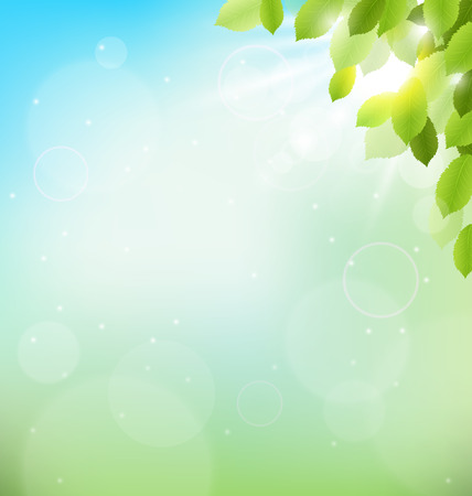 Tree foliage with sunlight on sky. Floral nature spring background