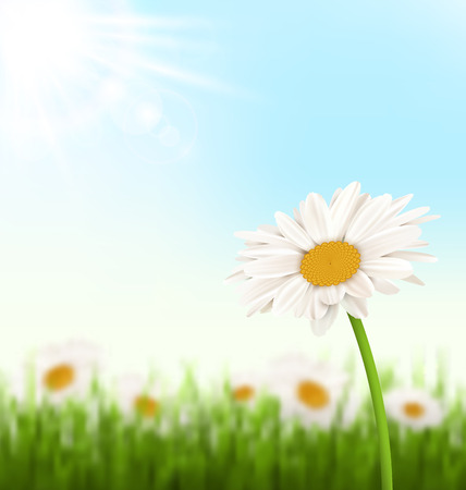 grass lawn: Green grass lawn with white chamomiles flowers and sunlight on sky background
