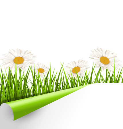 grass lawn: Green grass lawn with white chamomiles and wrapped paper sheet isolated on white. Floral nature flower background
