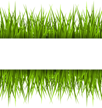 Green grass with frame isolated on white. Floral eco nature background Çizim
