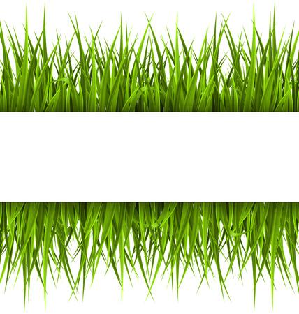 L'herbe verte avec cadre isolé sur blanc. Éco floral, nature, fond