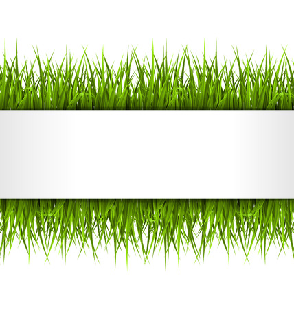 sedge: Green grass with frame isolated on white. Floral eco nature background Illustration