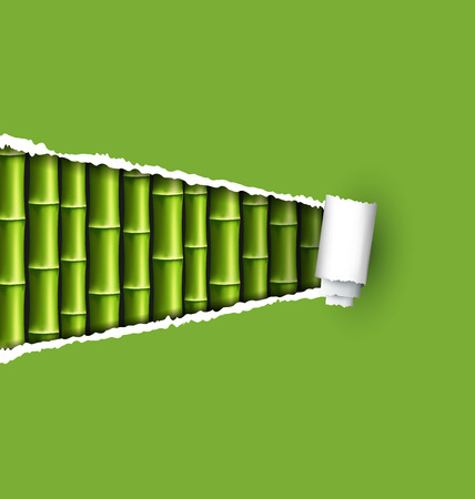 bamboo frame: Green bamboo grove with ripped paper frame isolated on white background