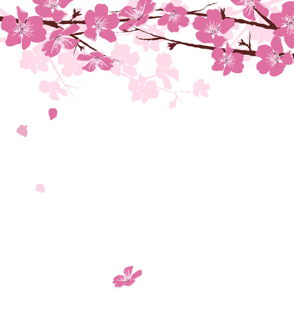 borde de flores: Ramas con flores de color rosa aisladas sobre fondo blanco