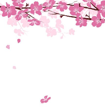 Takken met roze bloemen op een witte achtergrond Stockfoto