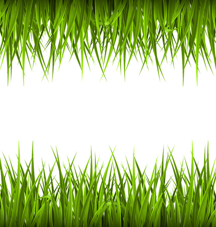sedge: Green grass like frame isolated on white. Floral eco nature background Stock Photo