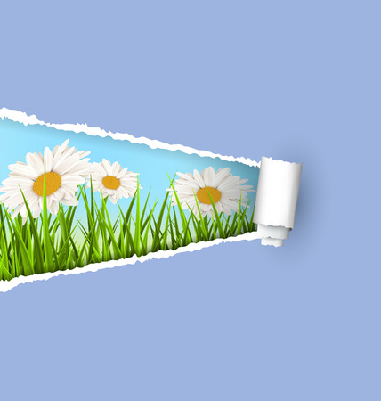 grass lawn: Green grass lawn with white chamomiles and ripped paper sheet isolated on green