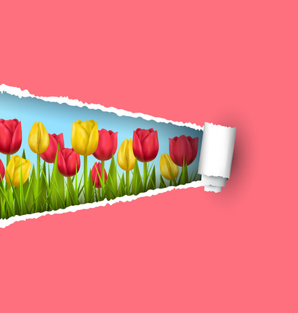 grass lawn: Green grass lawn with yellow and red tulips and ripped paper sheet isolated on pink. Floral nature flower background Illustration