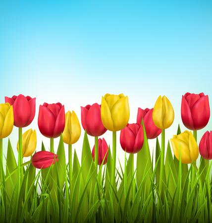 Groen gras gazon met gele en rode tulpen op hemel