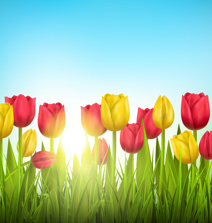 grass lawn: Green grass lawn with yellow and red tulips and sunlight on sky