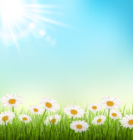 Green grass lawn with white chamomiles and sunlight on sky background Çizim