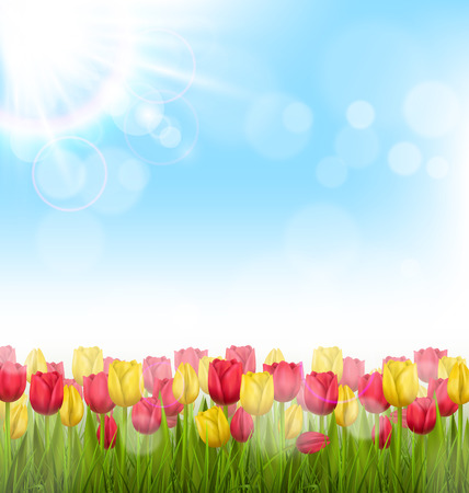 grass lawn: Green grass lawn with yellow and red tulips and sunlight on sky. Floral nature flower background Illustration