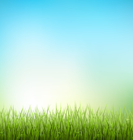 sunlight sky: Green grass lawn with sunrise on blue sky