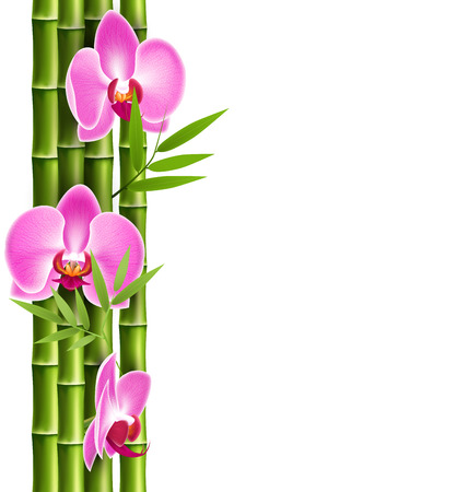 thai orchid: Orchid pink flowers with bamboo isolated on white background