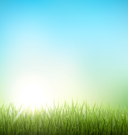 background green: Green grass lawn with sunrise on blue sky. Floral nature spring background