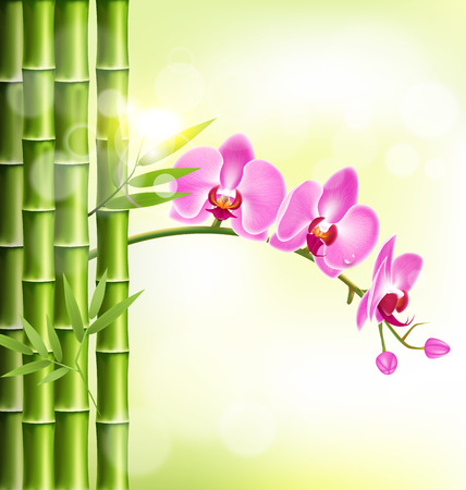 oriental medicine: Orchid pink flowers with bamboo and sunlight on light-green background
