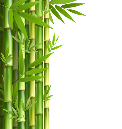 bamboo border: Green bamboo grove isolated on white background Stock Photo