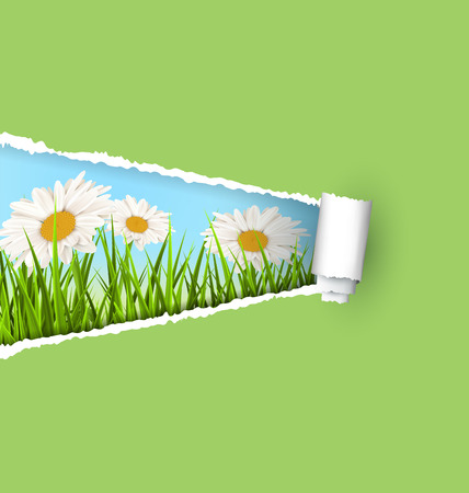 chamomiles: Green grass lawn with white chamomiles and ripped paper sheet isolated on green. Floral nature flower background Stock Photo