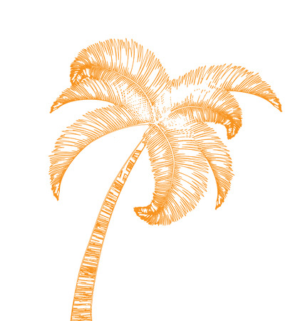 greet card: Hand-drawn palm tree isolated on white background Stock Photo